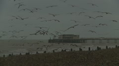Worthing pier with hundreds of sea gulls Stock Footage