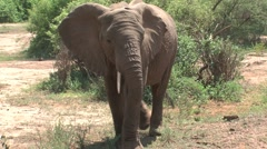 Elephant crossing the road Stock Footage