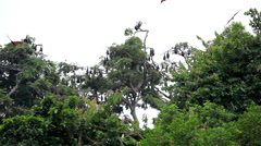 A Colony of Fruit Bats Hanging Upside Down in a Tree, Jungle in Bali, Indonesia Stock Footage