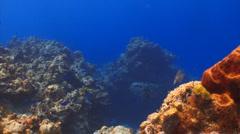 Deep coral reef still shot Stock Footage