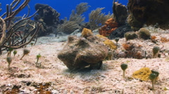 Hermit crab walking away over a coral reef Stock Footage