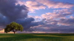 Tree Under Cloudy Sky - stock footage