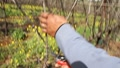 Vineyards Pruning Footage