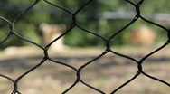 Stock Video Footage of Cheetah in Captivity