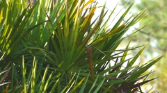 Palmetto Florida Stock Footage