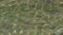Shallow lake bright rippling water Stock Footage