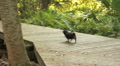 Small Puppy On A Boardwalk in A Nature Park Footage