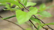 Green Leaf On A Tree Stock Footage