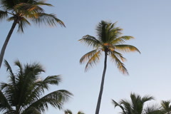 Morning palm trees. SD. Stock Footage