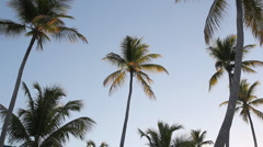 Morning palm trees. Stock Footage
