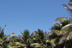 Palm trees with copyspace. SD. Stock Footage