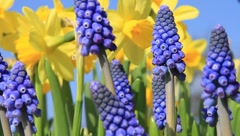 Signs of spring Stock Footage