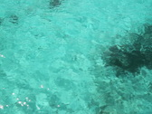 Travel over turquoise water. SD. Stock Footage