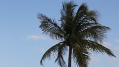 Palm Tree Stock Footage