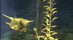 nautilus - stock footage