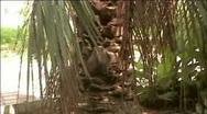 Palm Stock Footage