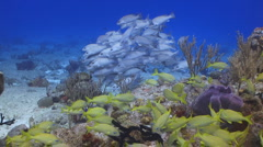 Fish schools and Reef Coral Stock Footage