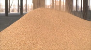 Processing and storage of grain Stock Footage