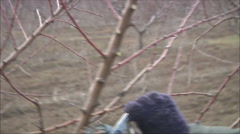 Trimming the tree Stock Footage