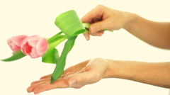 Female hands delicate touching tulip flower, isolated Stock Footage