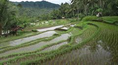 32 Bali HD P JPEG 25fps 10sec Stock Footage