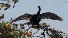 Birds in Florida Stock Footage