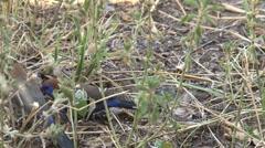 African birds Stock Footage
