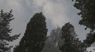 Snow falling 8 Scotland (slow zoom) Stock Footage