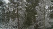 Snow falling 7 Scotland Stock Footage