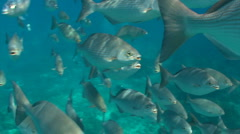 School of fish swimming near water surface Stock Footage