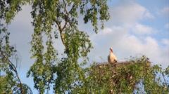 Stork in nestt Stock Footage
