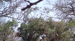 Elephant behind bush Stock Footage