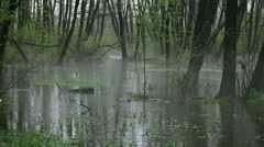 Rain in the swamp - stock footage