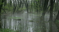 Stock Video Footage of Rain in the swamp