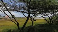 Aruba scene with trees Stock Footage