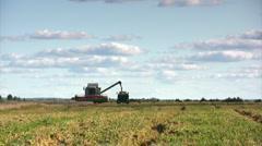 Wheat harvest season Stock Footage