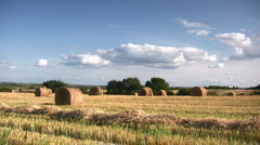 Ripe wheat field, harvesting Stock Footage