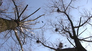 Silhouette of flying crows Stock Footage