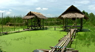 Stock Video Footage of Bamboo Huts Over Algae Pond