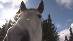 Horse Nose 1 Stock Footage