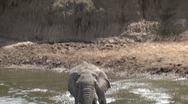 Stock Video Footage of Elephant afraid to cross the masai mara river