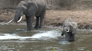 Elephant drinking water from the masai river Stock Footage