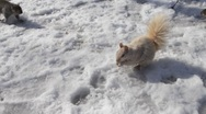 Stock Video Footage of squirrels