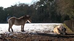 Horses in a Farm Field (1/3) - stock footage