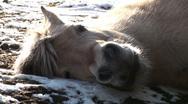 Horses in a Farm Field (3/3) Stock Footage