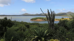 Bonaire lake with cactus Stock Footage