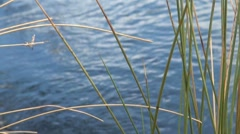 River Water and Plants Stock Footage