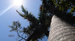 Palm Tree Vertical view Stock Footage
