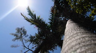 Stock Video Footage of Palm Tree Vertical view