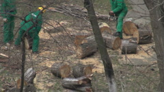 Professional arborist and specializes in removing trees Stock Footage